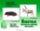 Животные, обитающие на территории нашей страны